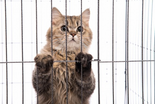 ケージ内の猫