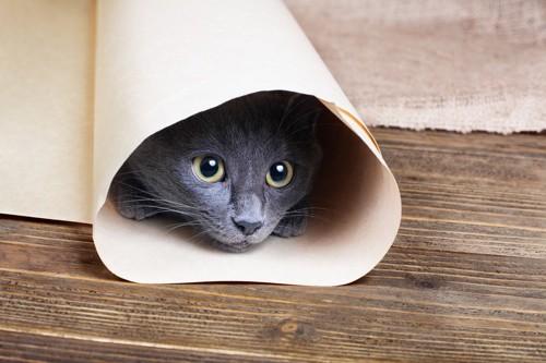 丸めた紙に入る猫