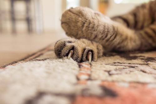 カーペットに爪を立てる猫の手
