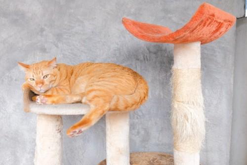 ちょっと不満気な猫