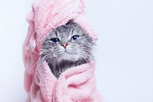 ピンクのタオルに包まれたサバトラ