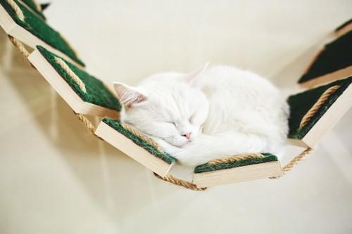 猫用つり橋の上で眠る猫