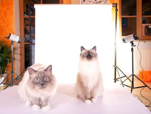 フラッシュ猫二匹
