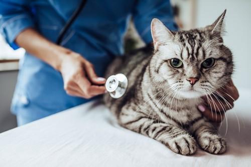 診察を受けている猫