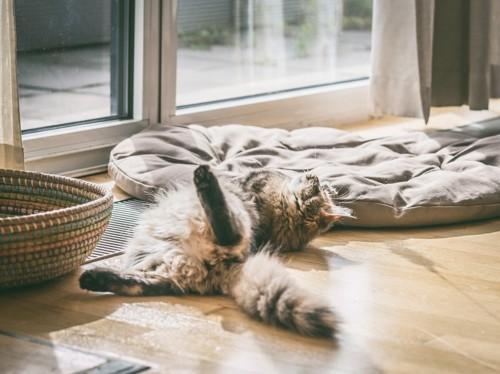 お尻を向けて仰向けで寝転がる猫
