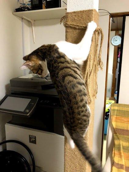 柱に上る猫