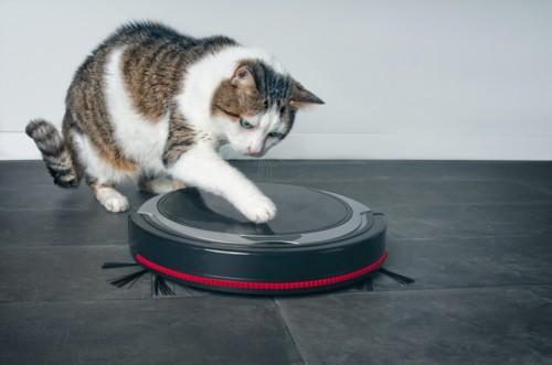 ロボット掃除機に興味を示す猫
