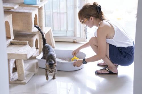 猫用トイレから出る猫と掃除する女性