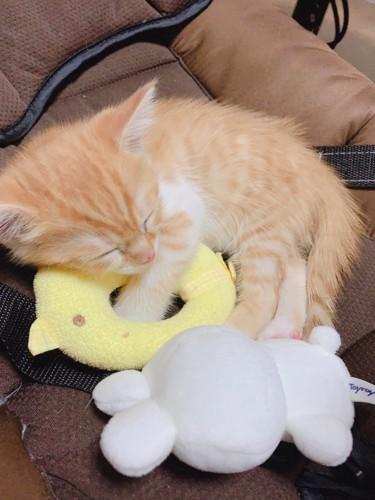 赤ちゃんのバウンサーで寝る子猫