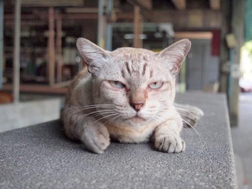 ふてくされた猫ちゃん