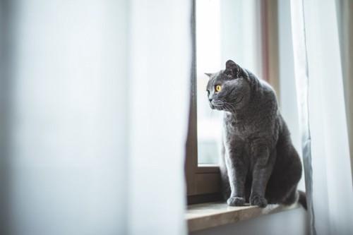窓辺で外を見る猫