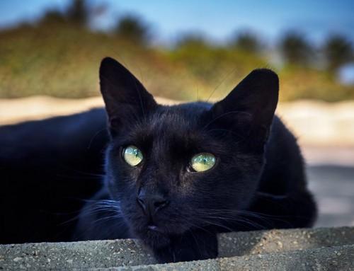 関心のなさそうな猫