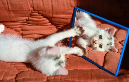 鏡を触る子猫