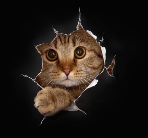 破れた切れ目から覗く猫