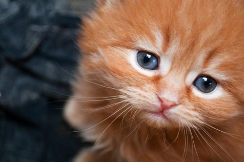 寂しそうな顔の子猫