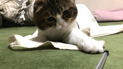 棒に前足を伸ばす猫