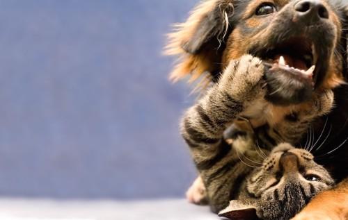 じゃれ合う猫と犬