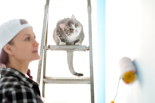 DIYする女性を見つめる猫