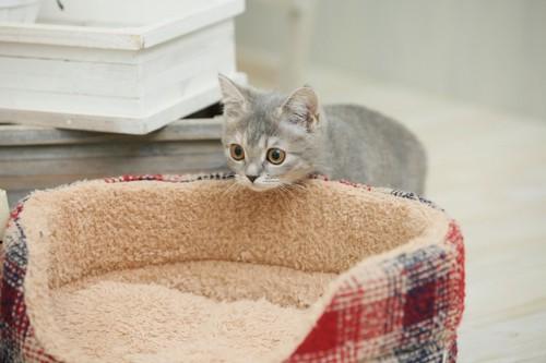 ベッドへ入ろうとする猫