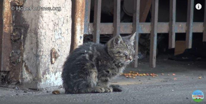 うずくまる目がふさがった猫