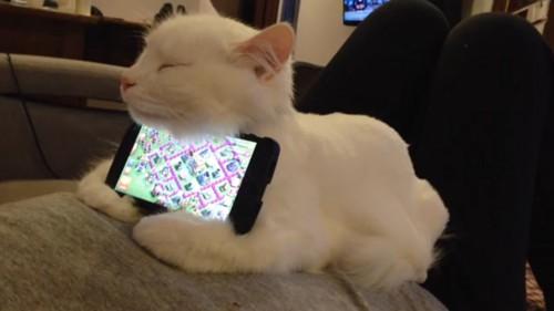 猫のスマホスタンド?