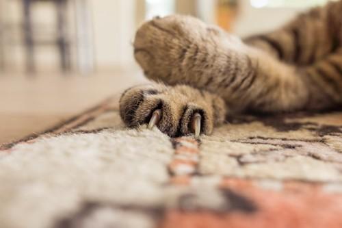 カーペットに猫の爪が引っかかる