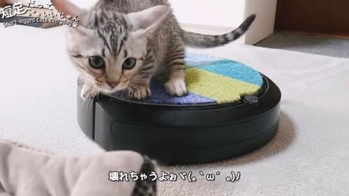 耳を倒して前を見る猫