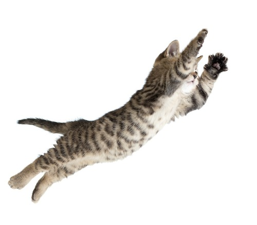 大きくジャンプする子猫