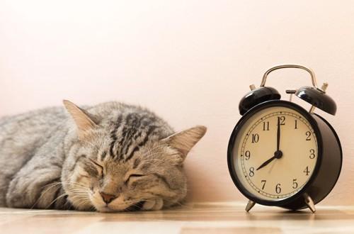 目覚まし時計の横で眠る猫