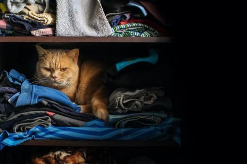 クローゼットの服の上にいる猫
