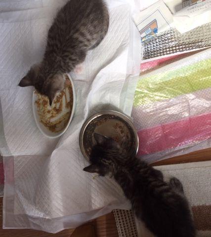 2匹ご飯を食べている