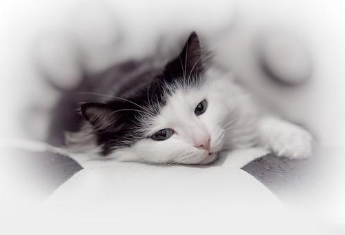 スモークに周囲を覆われた猫