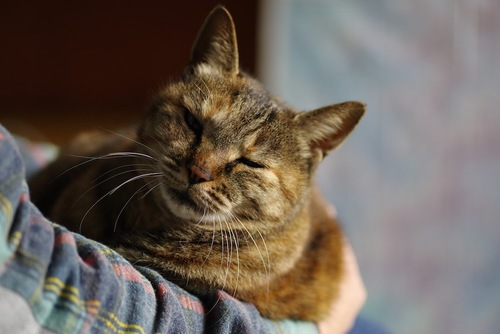 飼い主の膝の上に乗って抱かれている猫