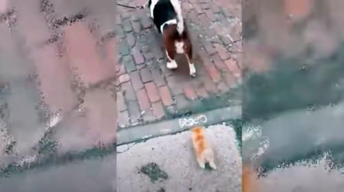 犬の後を走る子猫