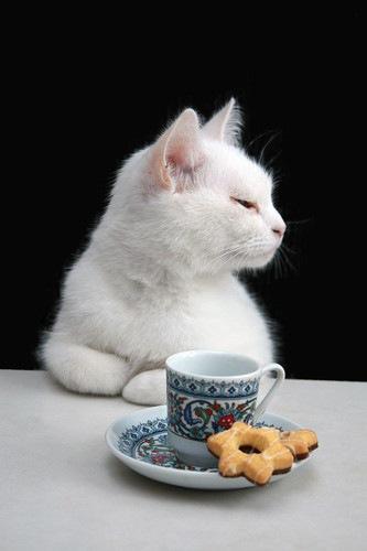 クッキーを食べようとしている猫