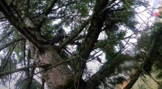 木の上で立ち往生する猫1匹目