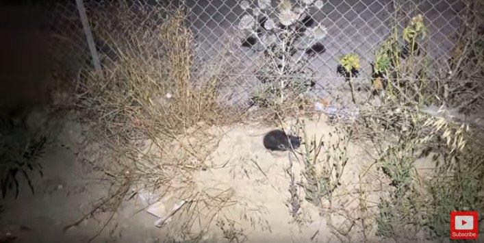 フェンス脇にうずくまる子猫