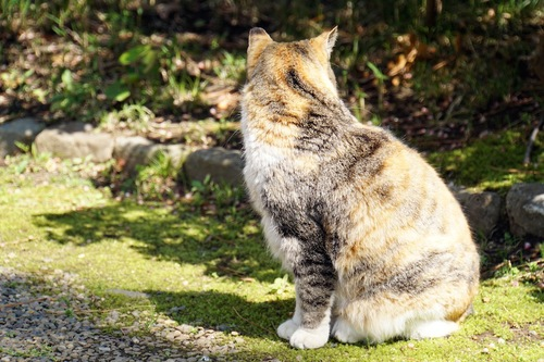 外で暮らす猫
