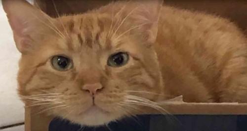 箱の中にチャトラ猫