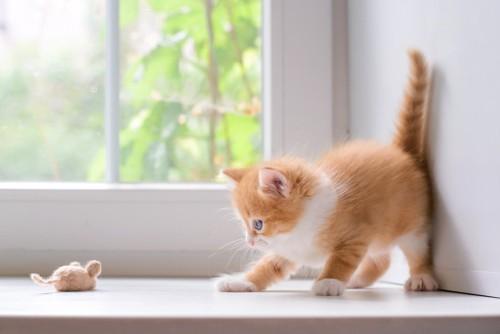 ねずみのおもちゃと遊ぶ子猫