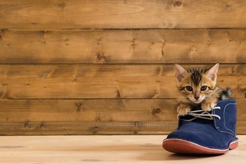 靴の中に入る子猫