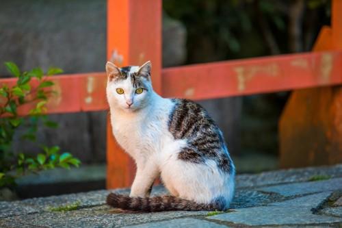神社で座っている猫