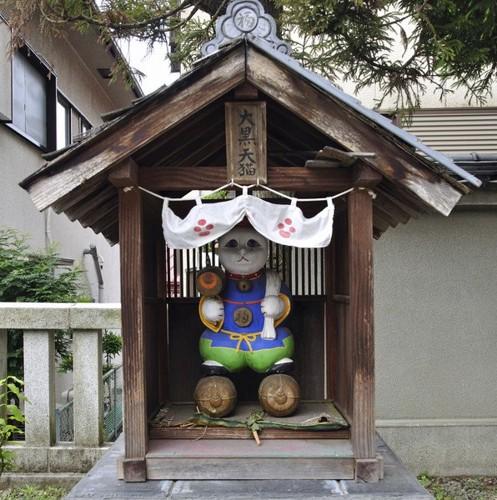 住吉神社の猫