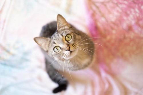 真っ直ぐ上を見つめる猫