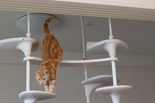 キャットタワーから降りてくる猫