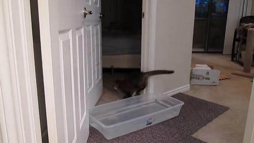 突破する猫