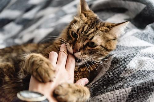 撫でる飼い主の手を噛む猫