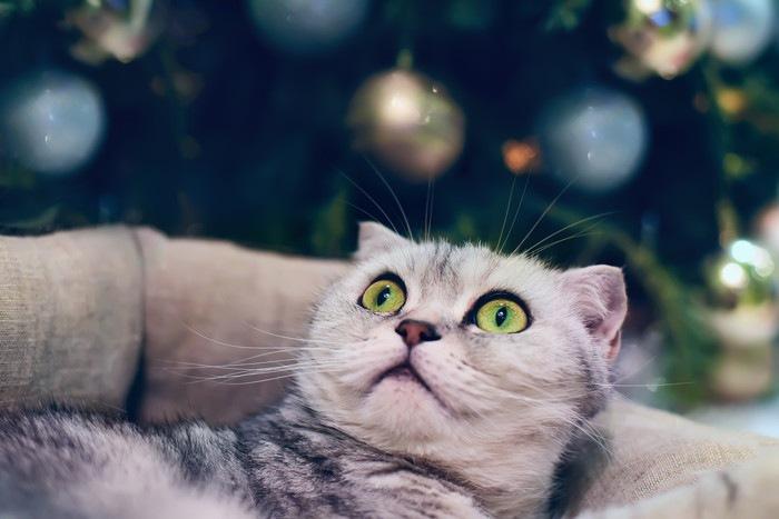 猫びっくり