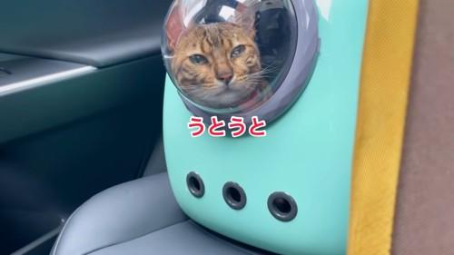 キャリーバッグの猫