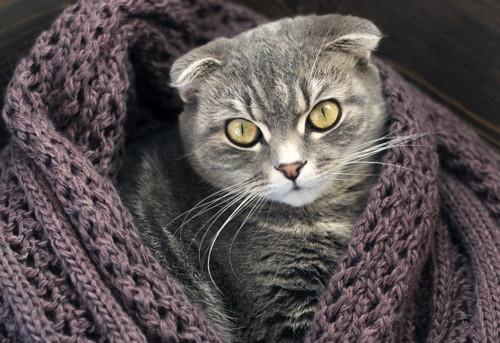 セーターの中の猫